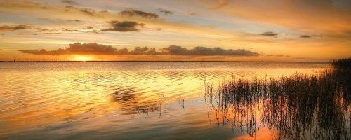 sunrise, reed, landscape